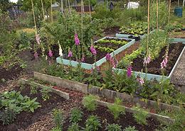 Tuinieren met verhoogde bedden: de voordelen