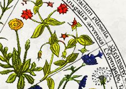 Een bloem voor elk uur: de bloemenklok van Linnaeus