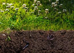 Bemesting: voedsel voor een gezonde bodem
