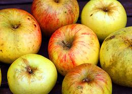 Onze appels: De appelrassen uit mijn tuin