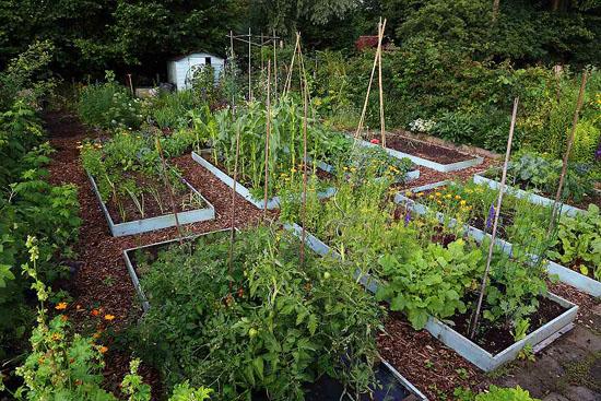 Tuin smakelijk een nieuw boek van vera greutink for De geheime tuin boek