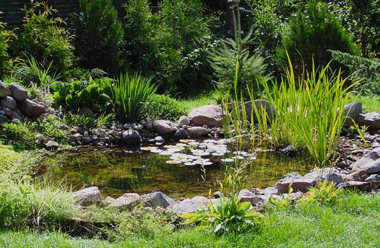 Een vijver vol leven recept voor een diervriendelijke vijver for Garden pond life