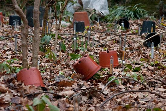 Winterklaar Maken Tuin : Tuin winterklaar maken